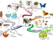 Bài 1, 2, 3, 4 trang 118 SBT Sinh 7: Em hãy nêu sự tiến hoá của cơ quan di chuyển ở động vật