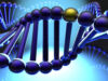 Bài 6, 7, 8, 9, 10 trang 40 Sách BT Sinh 9: Một gen có tổng A + X = 1500 nuclêôtit và T – G = 300 nuclêôtit. Xác định số nuclêôtit của gen