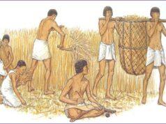 Bài 4. Các quốc gia cổ đại phương Đông – SBT Sử lớp 6: Cư dân các quốc gia cổ đại phương Đông sống chủ yếu bằng nghề gì?