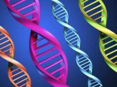 Bài tập trắc nghiệm trang 42 SBT Sinh 9: Trong tế bào lưỡng bội ở người có khoảng 1,5 vạn gen?
