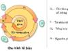 Kiểm tra 45 phút Phần 2 Chương IV – Phân bào Sinh 10: Quá trình nguyên phân không bao gồm kì nào sau đây?