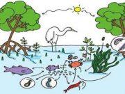 Kiểm tra môn Sinh lớp 12 15 phút Phần sinh thái học: Có bao nhiêu phát biểu đúng về diễn thế sinh thái?