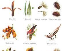 Bài 1, 2, 3, 4 trang 58 SBT Sinh 6: Căn cứ vào đặc điểm nào để phân chia các loại quả?
