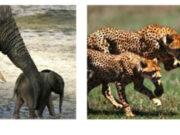 Khái niệm về quần thể và mối quan hệ giữa các cá thể trong quần thể: quan hệ hỗ trợ, quan hệ cạnh tranh, kí sinh, ăn thịt đồng loại