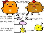 Bài tập trắc nghiệm trang 147 SBT Sinh 8: Cơ quan sản xuất trứng là