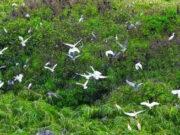 Sinh thái học và việc quản lí tài nguyên thiên nhiên: Môi trường đất, nước và không khí ngày càng bị ô nhiễm nặng nề