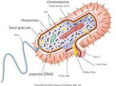 Bài 33, 34, 35, 36 trang 112, 113 SBT Sinh 10: Trong cơ thể của chúng ta chứa rất nhiều các vi sinh vật, chúng có lợi ích gì ?