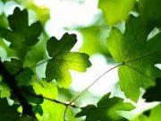 Đề thi học kì 1 năm 2019 môn Sinh Sở GD Nam Định: Ở thực vật, nguyên tố dinh dưỡng khoáng thiết yếu nào sau đây là nguyên tố vi lượng?