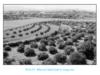 Bài 34. Tổng kết lịch sử Việt Nam từ sau chiến tranh thế giới thứ nhất đến năm 2000 – Lịch sử 9: Hãy nêu lên các giai đoạn chính và các đặc điểm lớn gắn liền với từng giai đoạn trong tiến trình lịch sử Việt Nam