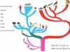 Đề thi học kì 2 môn Sinh lớp 7 trường THCS Minh Tân 2019: Giải thích sự tiến hóa của hình thức sinh sản hữu tính.