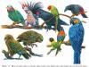 [Trường THCS Võ Nguyên Giáp] thi cuối học kì 2 môn Sinh học lớp 7 năm 2019: Giải thích vì sao trong dạ dày chim và gà thường có sỏi?