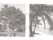 Tiết 9 – Bài luyện tập – Tuần 35 trang 77 Vở bài tập Tiếng Việt 2 tập 2: Dựa vào những câu hỏi gợi ý sau, viết một đoạn văn ngắn (4-5 câu) nói về một loài cây mà em thích