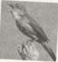 Tập làm văn – Ôn tập về tả con vật trang 77, 78 VBT Tiếng Việt 5 tập 2: Ghi lại một chi tiết hoặc hình ảnh so sánh mà em thích. Giải thích vì sao em thích chi tiết hoặc hình ảnh đó