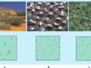 Bài 23, 24, 25, 26, 27 trang 128, 129 SBT Sinh 12: Hãy sử dụng hình vẽ để mô tả sự phân bố cá thể trong quần thể ?