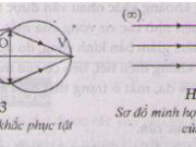 Bài 1, 2, 3, 4, 5 trang 203 SGK Lý 11: Mắt