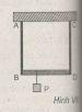 Bài VII.8, VII.9, VII.10 trang 94 SBT Vật Lý 10: Hỏi phải treo vật nặng P tại vị trí nào trên thanh BD để thanh này luôn nằm ngang ?