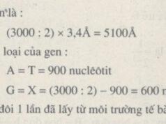 Bài 1, 2 trang 38 SBT Sinh 9: Một gen có 3000 nuclêôtit, trong đó có 900A. Khi gen tự nhân đôi 1 lần đã lấy từ môi trường tế bào bao nhiêu nuclêôtit?