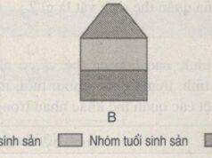 Bài 10, 11, 12 trang 92 SBT Sinh 9: Quan sát hình A, B, c sau đây và mô tả nguyên tắc chung xây dựng tháp tuổi