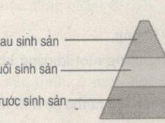 Bài tập trắc nghiệm trang 98 SBT Sinh 9: Khi nguồn thức ăn dồi dào, số lượng cá thể của quần thể trên một đơn vị diện tích hay trong một đơn vị thể tích sẽ giảm?