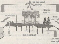 Bài tập trắc nghiệm trang 116 SBT Sinh 9: Nguyên nhân gây ô nhiễm không khí là cháy rừng?