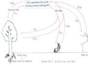 Bài tập tự luận trang 95 SBT Sinh 6: Thực vật có vai trò gì đối với nguồn nước ?