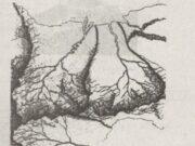 Bài 1,2,3 trang 71,72,73,74 SBT Địa lớp 6: Những nhánh sông nhỏ được gọi là gì?