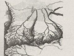 Bài 23. Sông và hồ – SBT Địa lớp 6: Những nhánh sông nhỏ được gọi là gì?