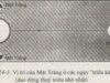 Bài 1,2,3 trang 75, 76, 77, 78 SBT Địa lớp 6: Hãy trình bày mối liên quan giữa thuỷ triều với Mặt Trăng