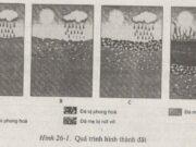 Bài 1,2 trang 80, 81, 82 SBT Địa lớp 6: Tên của hai nhân tố chính tác động vào đá để hình thành đất là gì ?