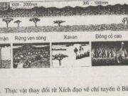 Bài 1,2,3,4 trang 83 đến 86 SBT Địa lớp 6: Yếu tố khí hậu đã làm cho thực vật thay đổi như thế nào?