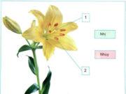 Bài 61. Ôn tập: thực vật và động vật – Khoa học 5:  Trong các cây dưới đây, cây nào có hoa thụ phấn nhờ gió, cây nào có hoa thụ phấn nhờ côn trùng