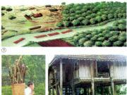Bài 65. Tác động của con người đến môi trường rừng – Khoa học 5: Nêu các nguyên nhân khác khiến rừng bị tàn phá