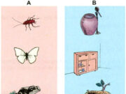Bài 70. Ôn tập và kiểm tra cuối năm – Khoa học 5:  Loài vật nào dưới đây đẻ nhiều con nhất trong một lứa