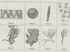 Bài 1, 2, 3, 4 trang 71 SBT Sinh 6: Nêu vai trò của tảo trong thiên nhiên và đối với đời sống con người.