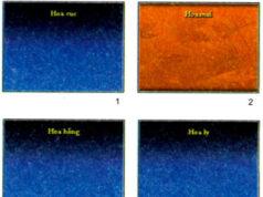 Bài 10. Thêm hình ảnh vào trang chèn – Tin học 9: Hãy nêu các bước cần thực hiện để chèn hình ảnh vào trang chiếu