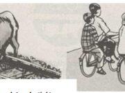 Bài 14. Thực hiện trật tự, an toàn giao thông – GDCD 6: Làm thế nào để tránh được tai nạn giao thông, bảo đảm an toàn khi đi đường ?