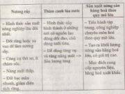 Bài 8. Các hình thức canh tác trong nông nghiệp ở đới nóng – Địa lí 7: Điều kiện để thâm canh lúa nước là gì