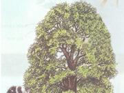 Bài 61. Trao đổi chất ở thực vật – Khoa học 4 : Kể những dấu hiệu bên ngoài của sự trao đổi chất giữa thực vật và môi trường