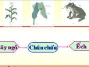 """Bài 65. Quan hệ thức ăn trong tự nhiên – Khoa học 4: Từ những """"thức ăn"""" đó, cây ngô có thể tạo ra những chất dinh dưỡng nào để nuôi cây"""