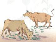 Bài 66. Chuỗi thức ăn trong tự nhiên – Khoa học 4: Nêu một số ví dụ khác về chuỗi thức ăn