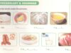 B. Vocabulary & Grammar – Unit 5 – Sách bài tập Tiếng Anh 7 thí điểm: Do the puzzle. Find the food in the yellow column.
